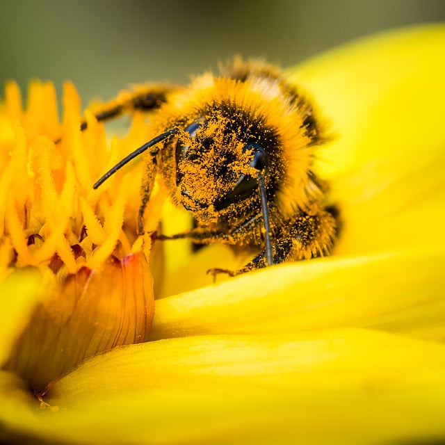 Winter Recipe: Pollen Patties for Bees
