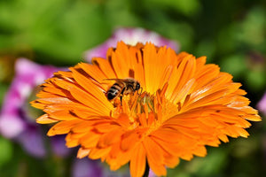 National Honey Bee Day -- August 15, 2020