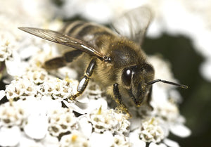 Bees May Struggle at Lift Off in the Wind