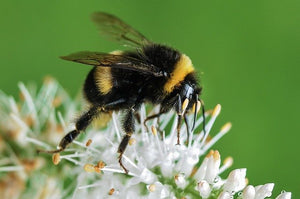 Bees and The Chemistry of Nectar