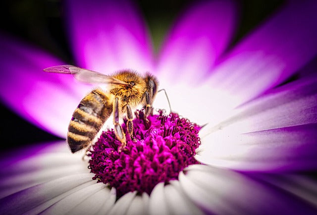 Scientists Take On Colony Collapse Disorder
