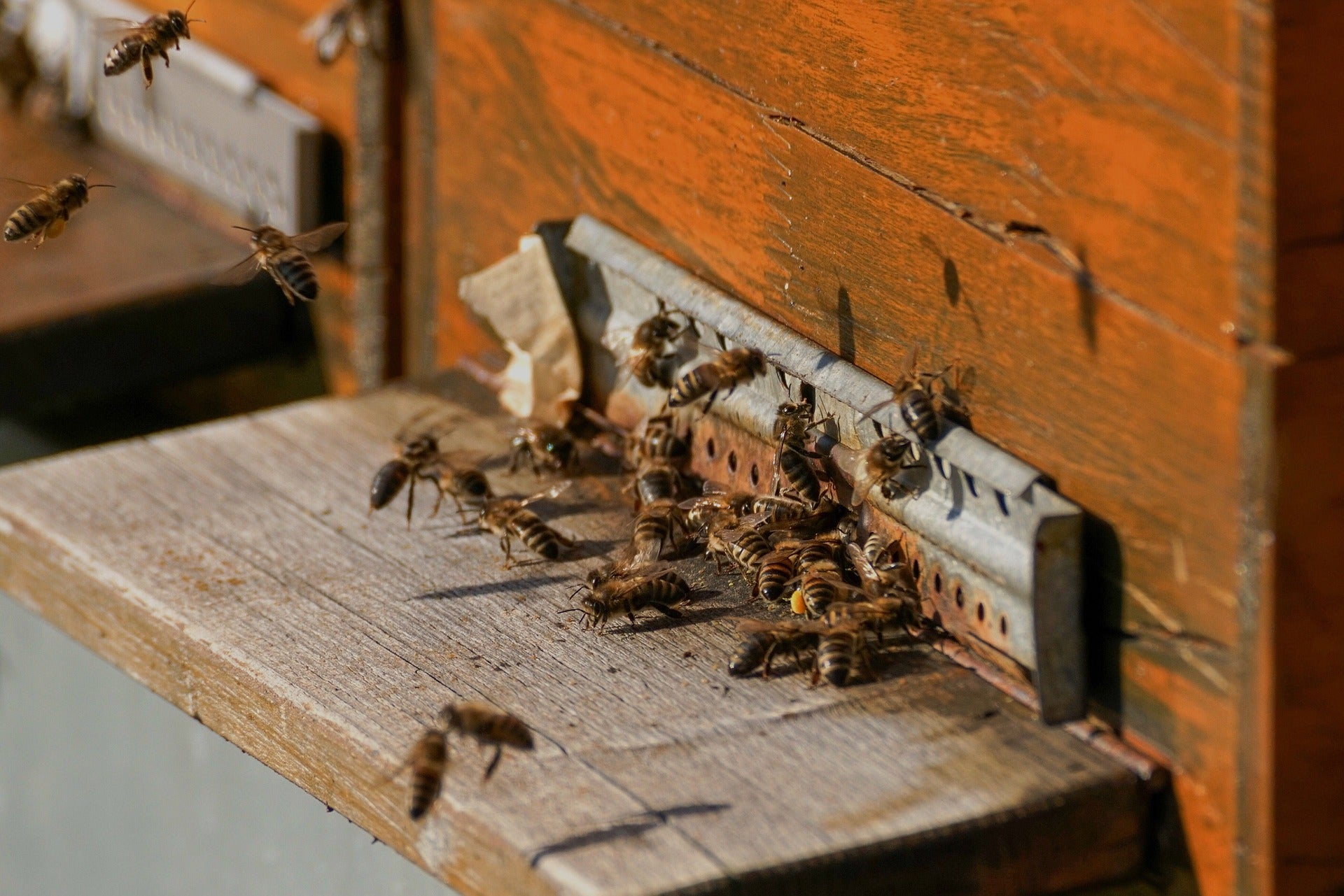 The Bees of Notre Dame Survived the Inferno