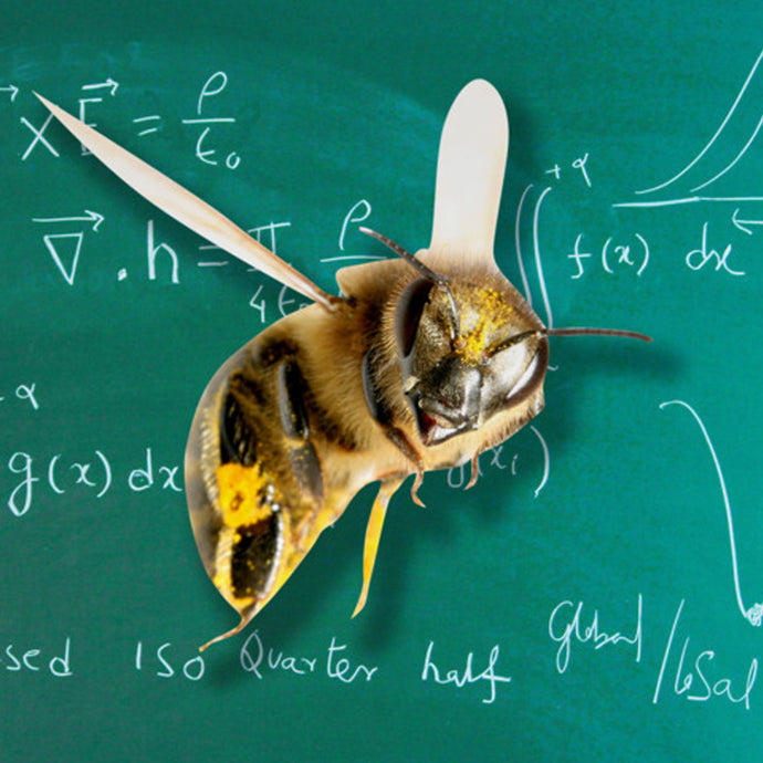 Bees Can Do Simple Math