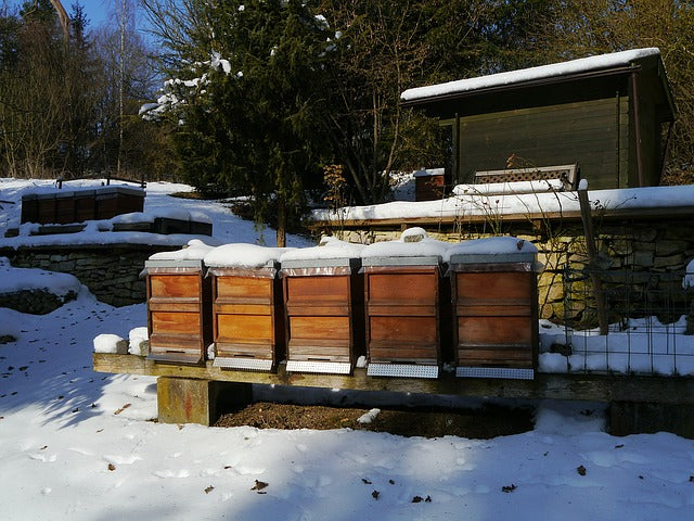 Alberta Beekeepers Hit Hard by Winter and Covid-19