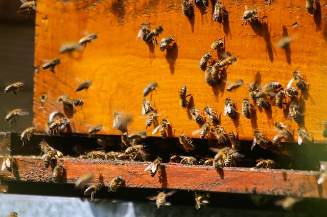 Beekeeping 101 Virtual Class - Become a Beekeeper