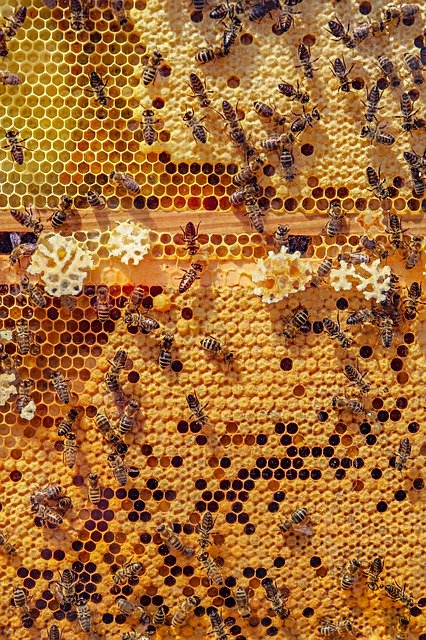 Honeybee Riddle from TED-Ed