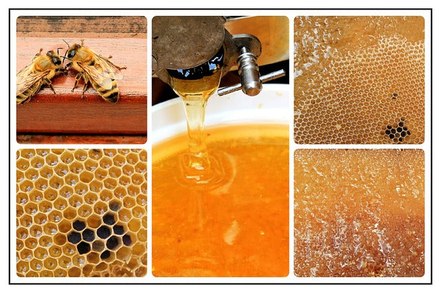 Honey is Liquid Gold