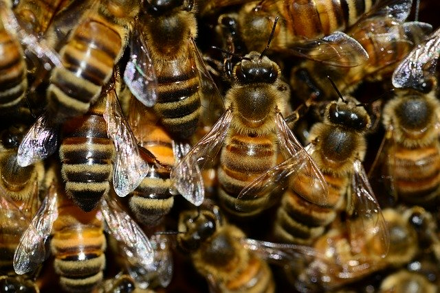 Herzegovina Beekeepers to Produce Bee Venom for Breast Cancer Treatment