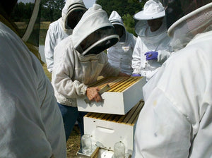 Czech City Pilsen to use AI to Monitor Beehives