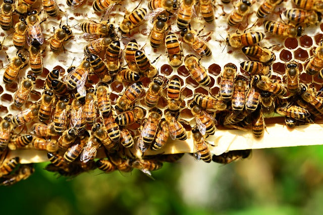 Northern Ireland Beekeeping Conference