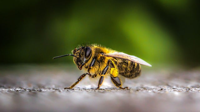 How Honeybees Survive Winter Weather