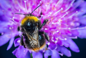 Bumblebees Flight Mysteries