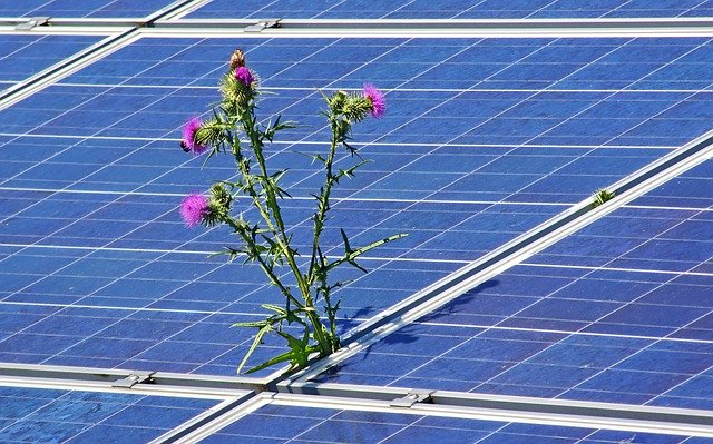 Flower Power Solar Farms Help Save the Bees