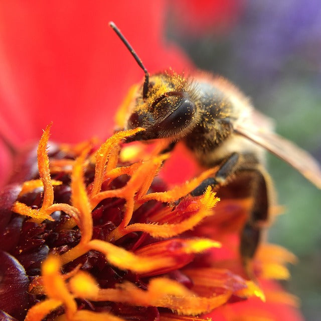 Air Pollution Harms Wild Pollinators