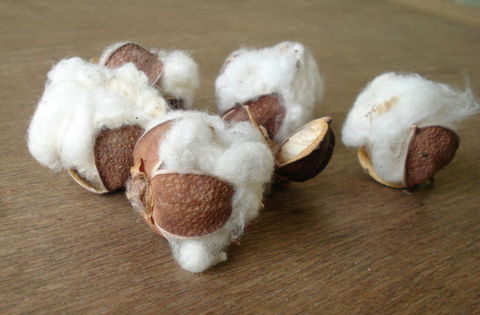 kala cotton balls