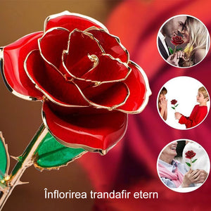 Bloom Eternal 24K Rose Rose