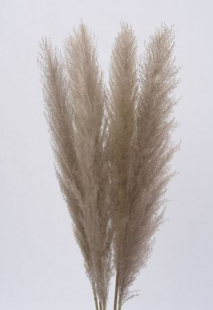 Pampas Plumes 48""