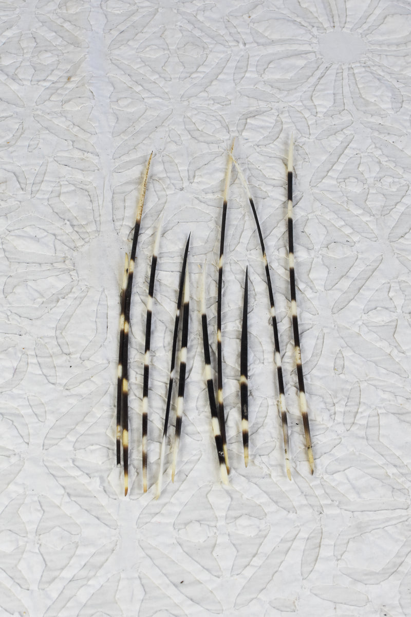 Bundle of Porcupine Quills