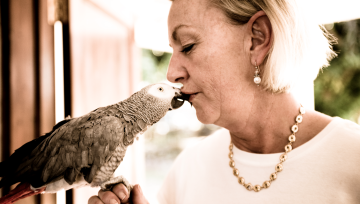 Lance Corporal Hartley Chimsoro, the African Grey Parrot, survives a hawk attack and is immediately promoted to Captain, and gets lots of kisses from Catja.