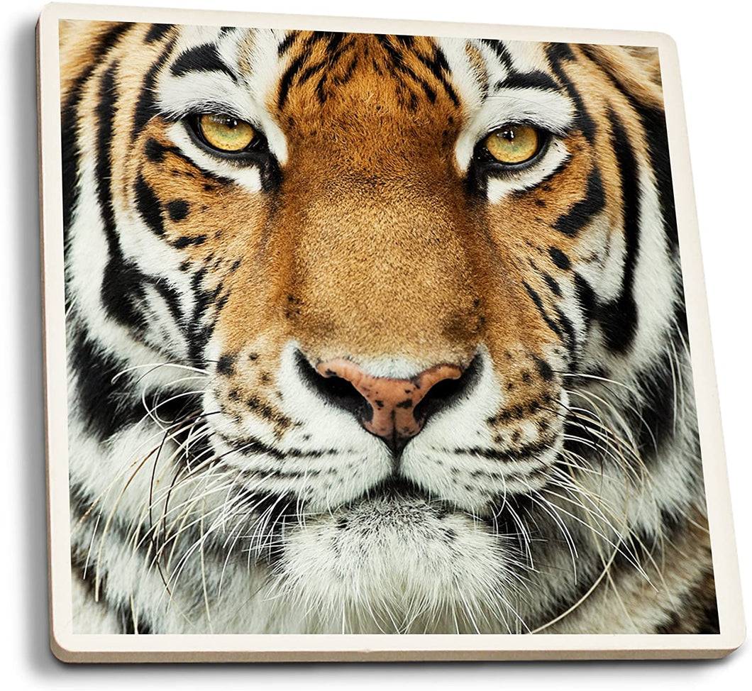 Lantern Press Tiger Face Coaster