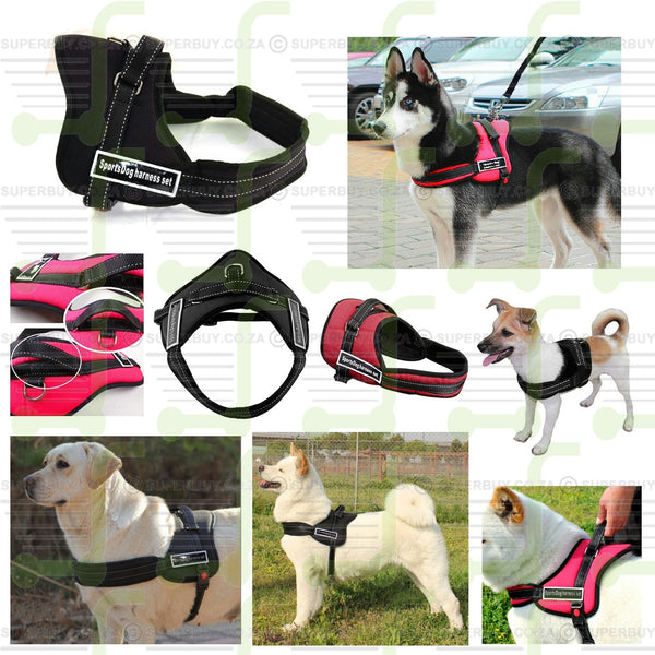 Padded Sports Dog Harness