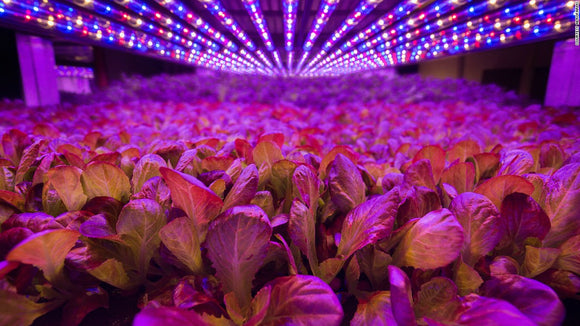 LED vs HID Grow Lights: Which Ones Are Better?