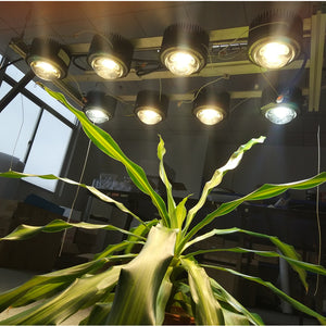 Shine Grow 400W - Vero29 Cob Kits Gen.7 - led grow lights KingOfLeds