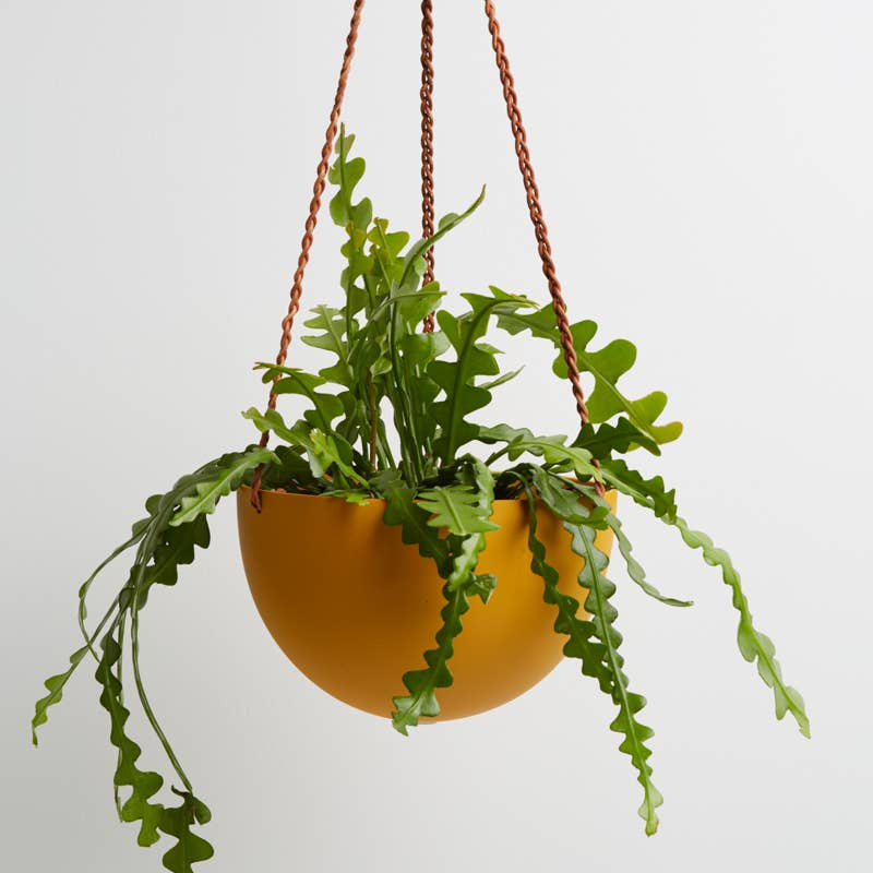 Block Color Dome Hanging Planter