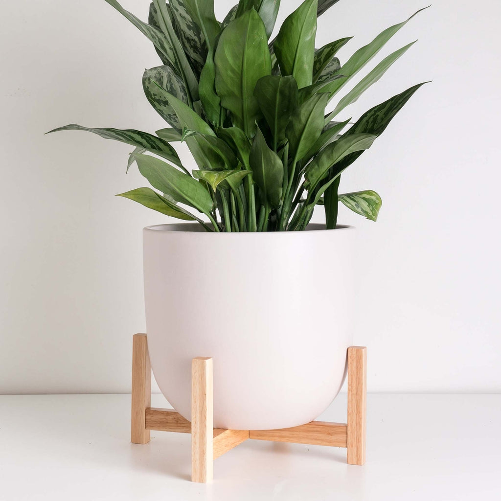 Soft Pink Contour Planter with Natural Wood Stand