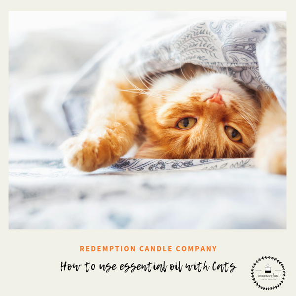 How to Use Essential Oils Safely with your Cats