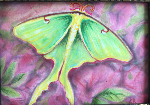 Framed Pastel Painting of Luna Moth