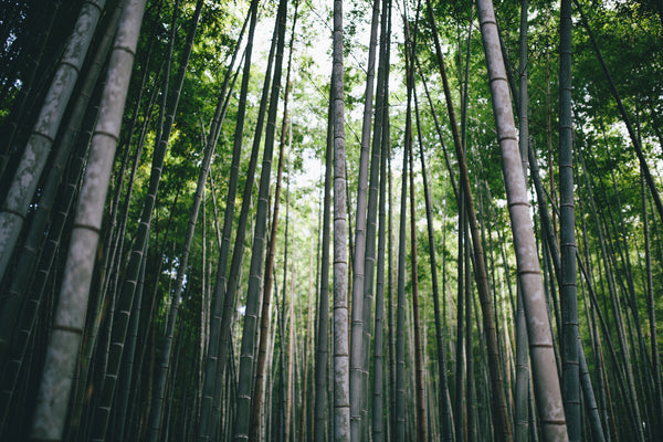 Why Bamboo Is the New Steel of Architecture