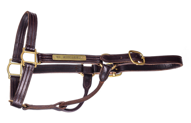 Halter -  Mr Muscleman - Kentucky Horse Park