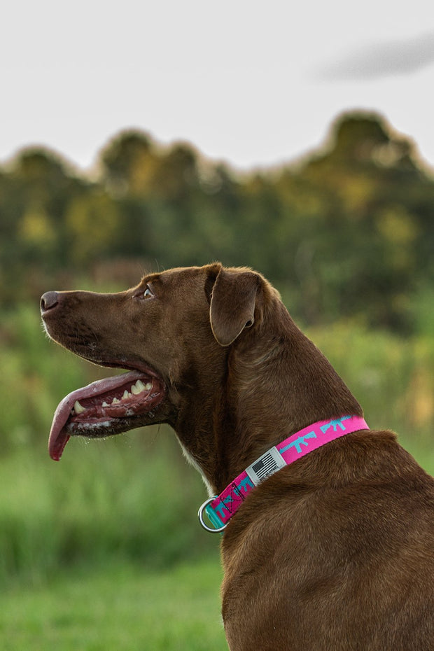 AR Dog Collar