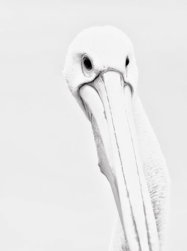 Gaetano Zammit - Are You Done - Pelican
