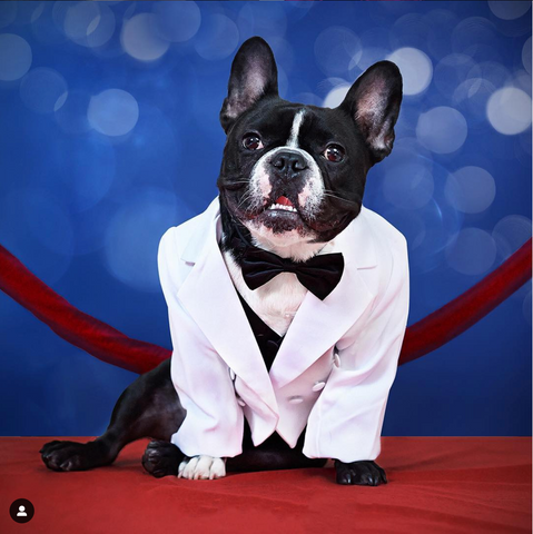 best frenchie instagrams
