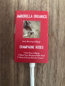 Champagne + Roses