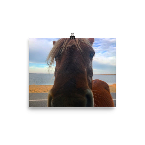 Pony Friend Photo paper poster