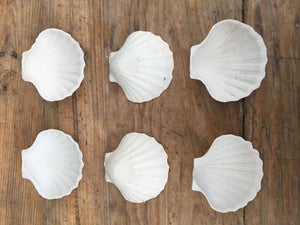 Pretty Pair of Porcelain Scallop Shell Dishes