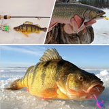 Goture Ice Fishing Jigs in Tackle Box, Crappie Trout Walleye Perch Winter Ice Fishing Lures Baits 5 Types, Pack of 50
