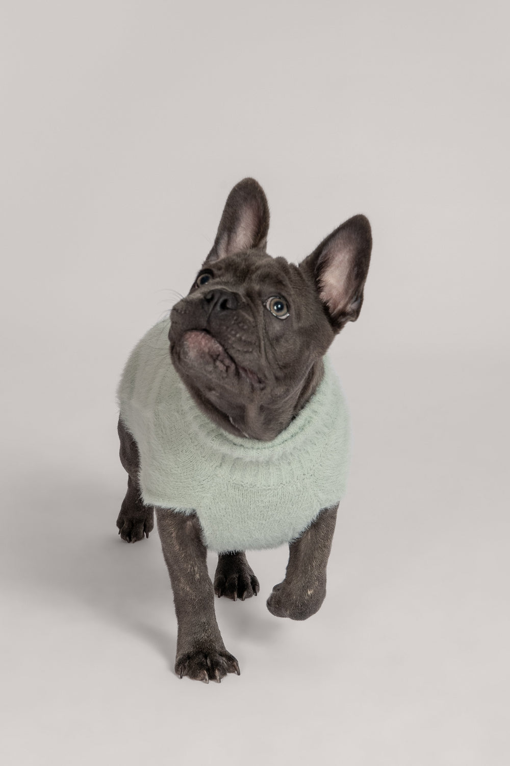 Stellie Fluffy Roll Neck Dog Jumper - Pistachio - MESHKI ?id=16177816567883