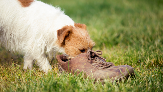 8 Smelly Leather Shoe Remedies