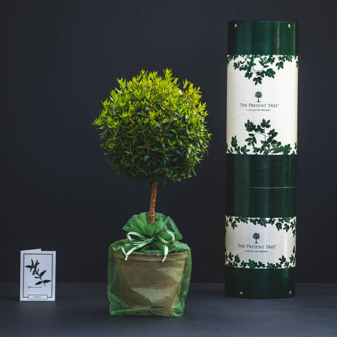 Unique fathers day gifts - tree of love