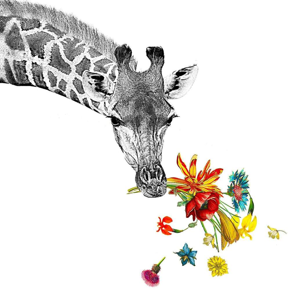 PPD - Happy Giraffe Beverage/Cocktail Paper Napkins