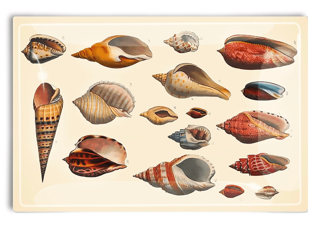 Ben's Garden, Decoupage Glass Tray Tortola Seashell Collection