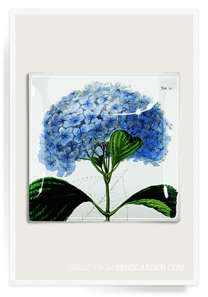 Ben's Garden, Decoupage Glass Tray Blue Hydrangea