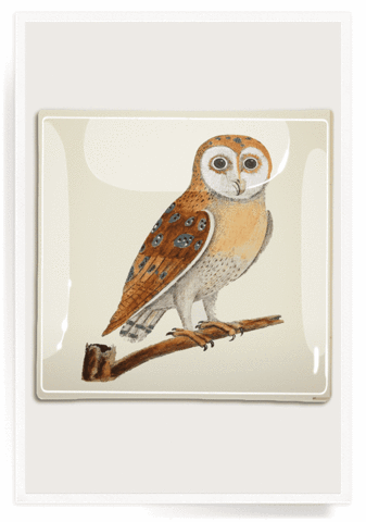 Ben's Garden, Decoupage Glass Tray, Owl Hoot