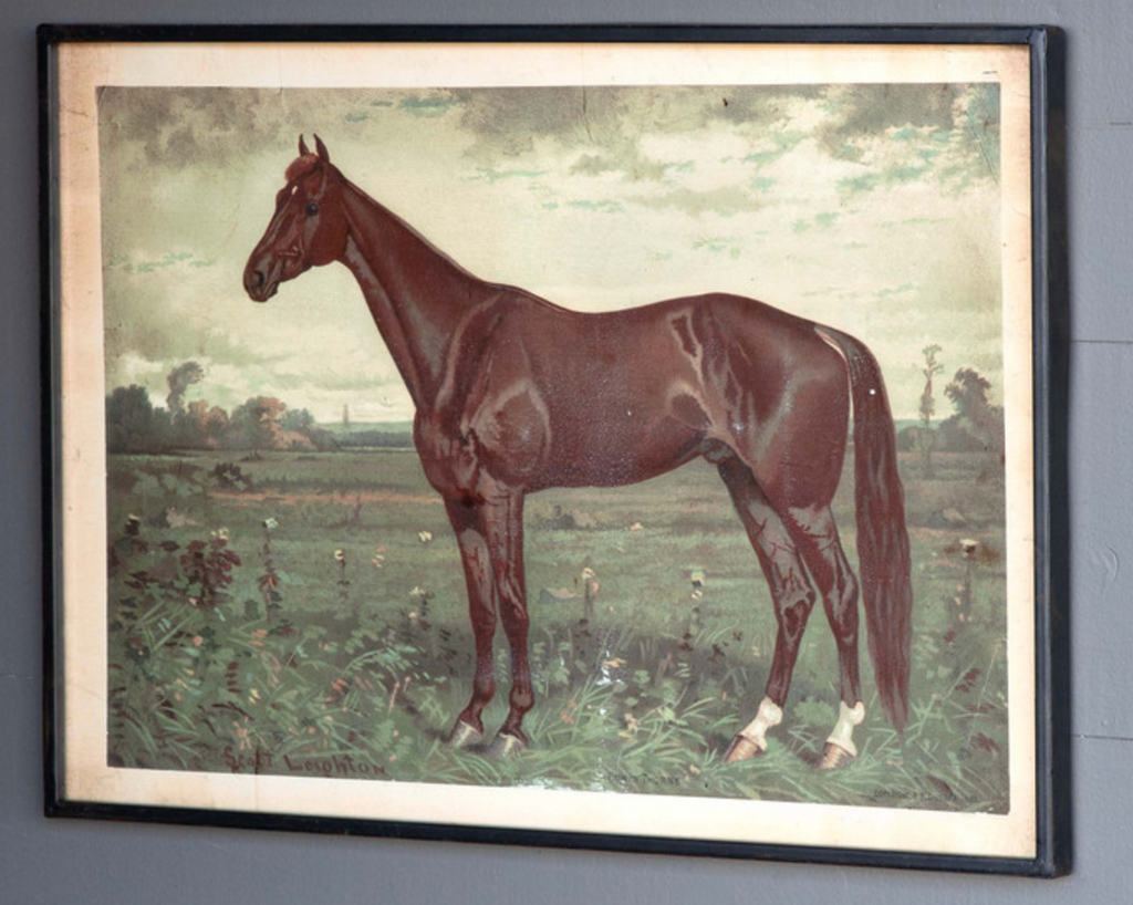 Park Hill - Prized Horse Facing Left in Print