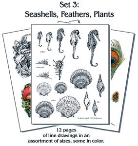 Pyro Paper Packet #3 SEASHELLS FEATHER PLANTS