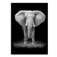 Wildlife Dieren (1) Fotografie | Canvas Art - Science Factory